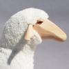 2775-grand-mouton-blanc