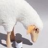 2771-mouton-blanc-qui-broute