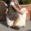 2754-otto-le-mouton-qui-roule