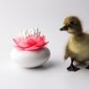 Distributeur de coton tige - Lotus blanc et rose