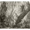 le-papier-peint-panoramique-amazonia