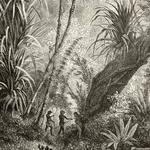 Papier peint panoramique - PDNTDL1603004 - Amazonia