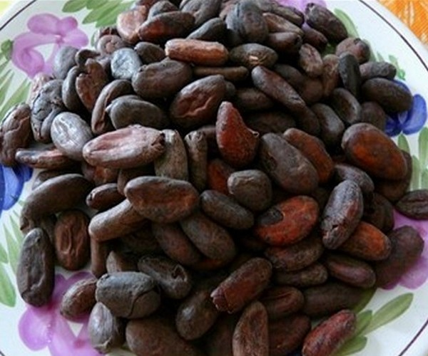 CACAO FEVES  TORREFIEES  (60 g )