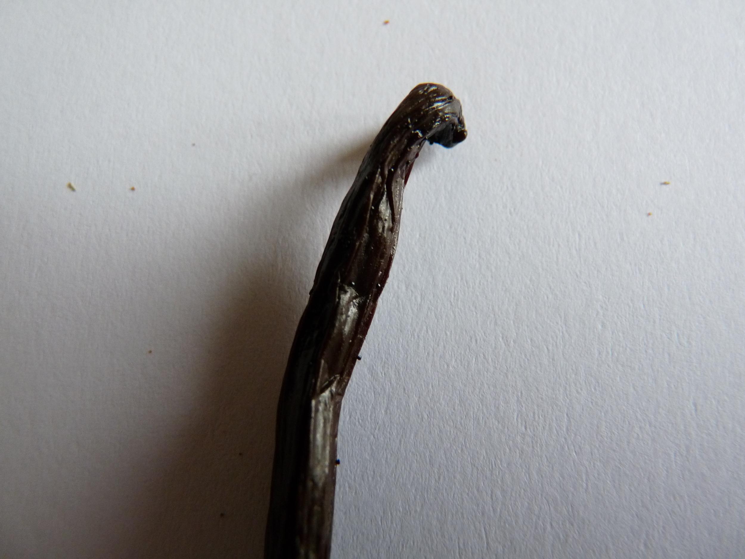 1 GOUSSE DE VANILLE DE MADAGASCAR 14 cm 15 cm