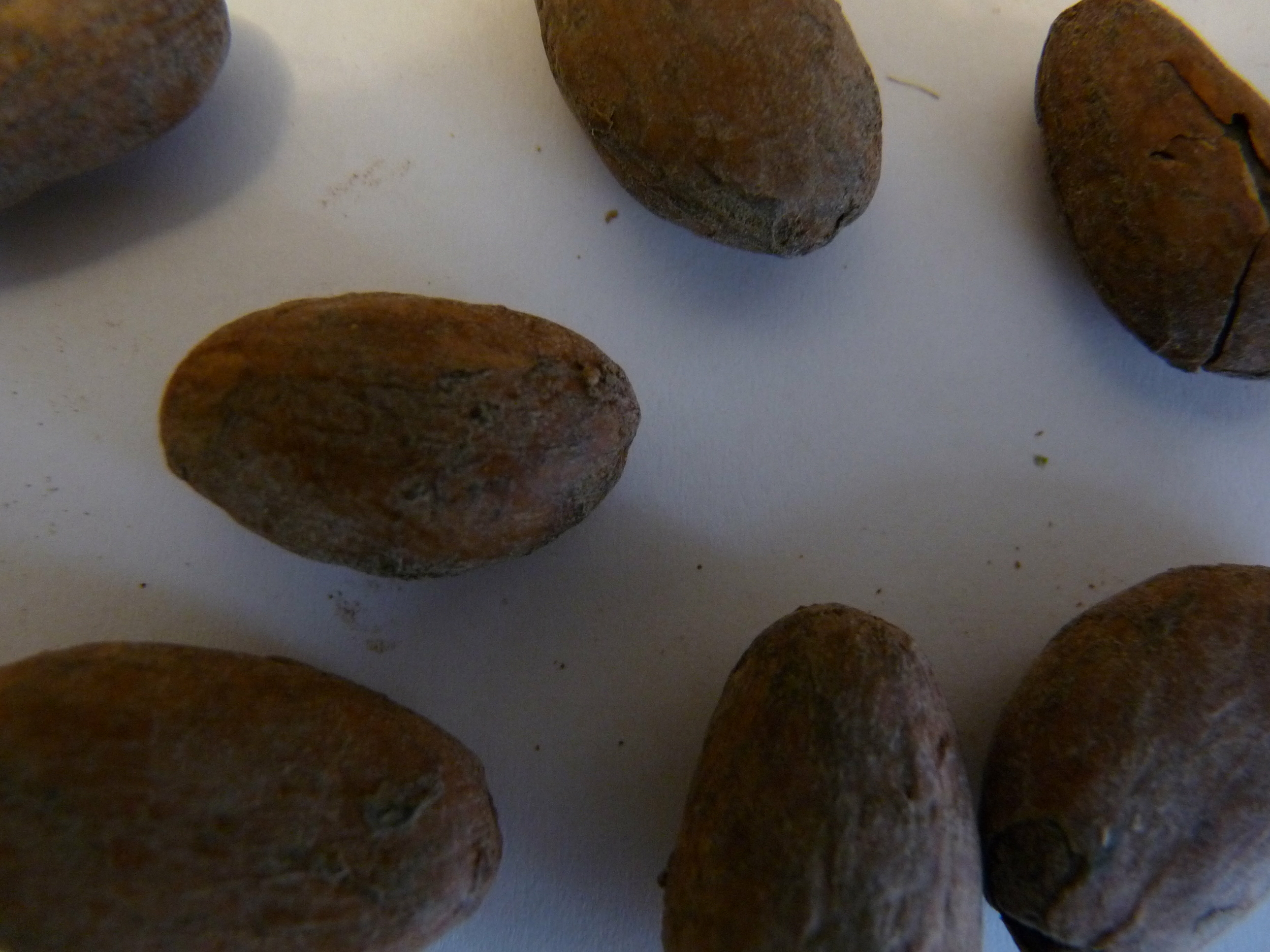 CACAO FEVES  TORREFIEES  60 g