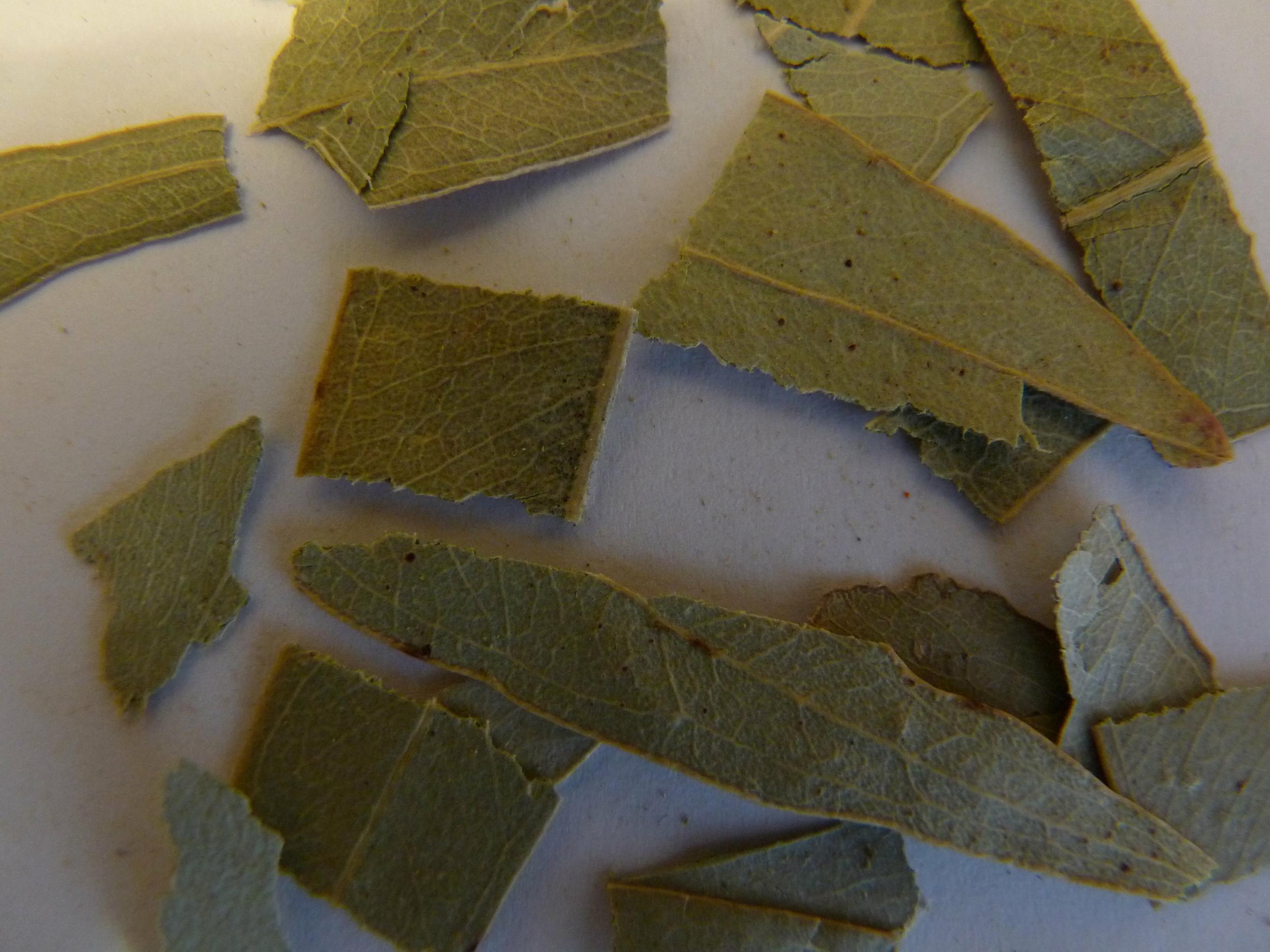 FEUILLES EUCALYPTUS 70 g