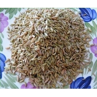 FENOUIL GRAINES ( 50 g )