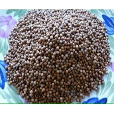 Coriandre graines500 (Copier)