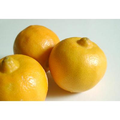 bergamote-fruit