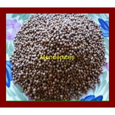 Coriandre graines500 (Copier) (Copier) (Copier)
