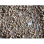 Coriandre graines 1