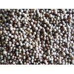 Coriandre graines 2