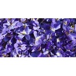 Arome violette777