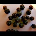 Poivre rouge de phu quoc 5