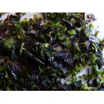 Algues 2