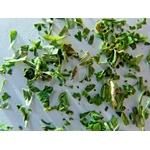 Fines herbes 1