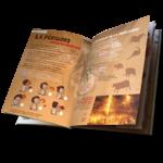 France-des-enfants-perigord-nouvelle-aquitaine-prehistoire-versailles-cathedrale-foie-gras-proumeyssac-visiter-lascaux-cro-magnon-peintures-rupestres