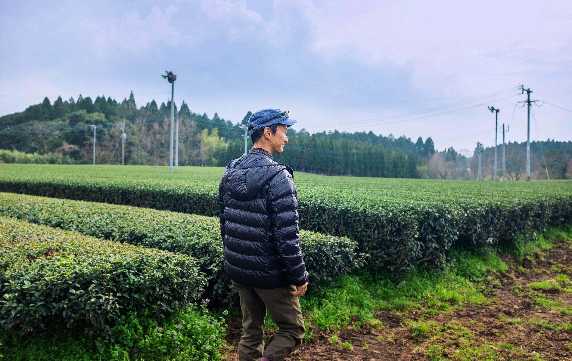 Découvrir notre gamme de thé vert Japonais