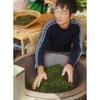 Producteur Thé Vert Japonais Mr Miyazaki Kyushu 2