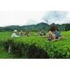Producteur Thé Vert Japonais Mr Miyazaki Kyushu