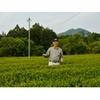 Producteur Thé Vert Japon Kukicha Mie Hayashi