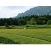 Jardin de Thé Kagoshima Watanabe Bio