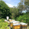 Propolis a Macher Brute Origine France