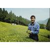 Producteur Thé Vert Japonais Bio Matsumoto