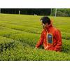 Thé Grillé Torréfié Japonais Houjisha Biologique Kirishima Jardin 3