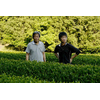 thé vert japonais kamairicha biologique famille kadota de miyazaki