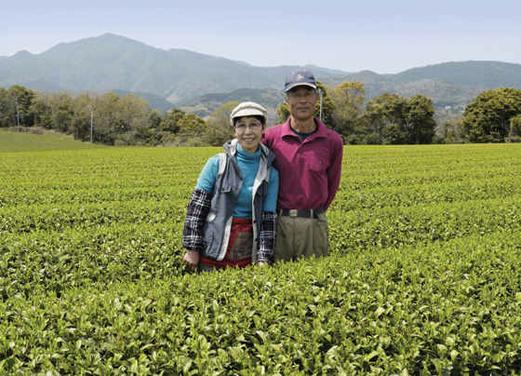 Petit Producteur Thé Vert Japonais Famille Morimoto