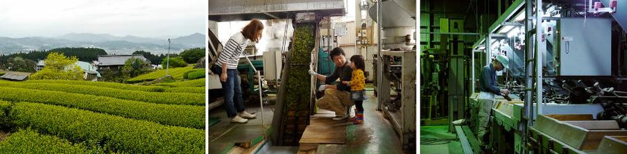 the vert japonais bio petit producteur