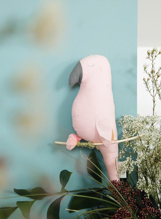 Scalaë Ernesto le perroquet 1