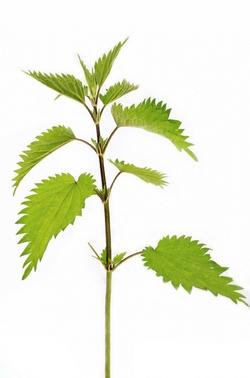 plant-164571_1280