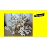 Gros Bloc arbre blanc Corail coquillage déco collection Mer 1,052 kgs