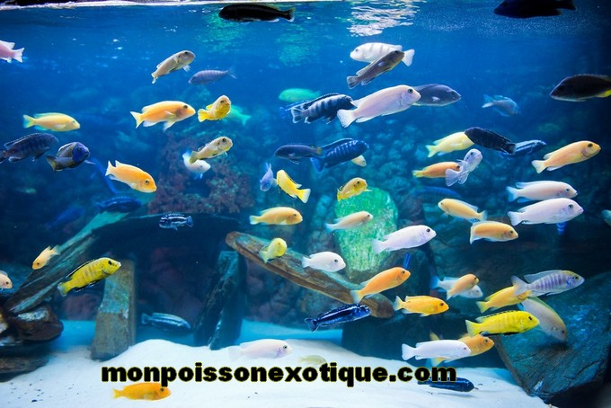 exemples d 39 aquariums aquariophilie poissons. Black Bedroom Furniture Sets. Home Design Ideas