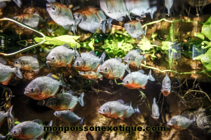 Exemples Daquariums Monpoissonexotiquecom Monpoissonexotiquecom