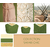 Collection safari chic-Mouettes Vertes