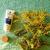 beauty garden - baume nettoyant visage