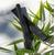 Zero - charbon végétal actif pour gourde