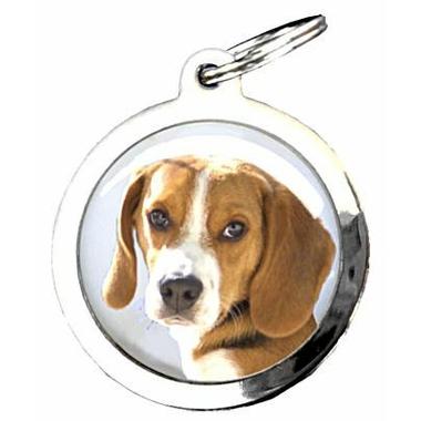 41beg-beagle-0356842001386948991-0253755001386951473