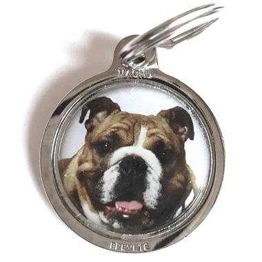 bulldog_Anglais