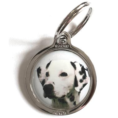 medaille_chien_dalmatien