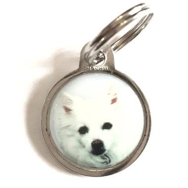 medaille_chien_spitz_nain