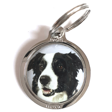 Border_Collie_chien_de_berger