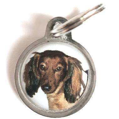 medaille_chien_teckel_poils_longs