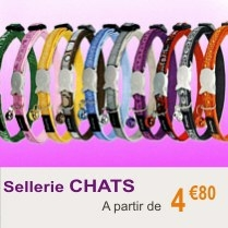 sellerie_chat