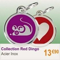 red-dingo