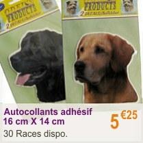 chien_adhesif