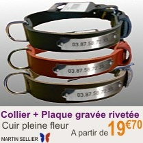 collier_chien_rivetes